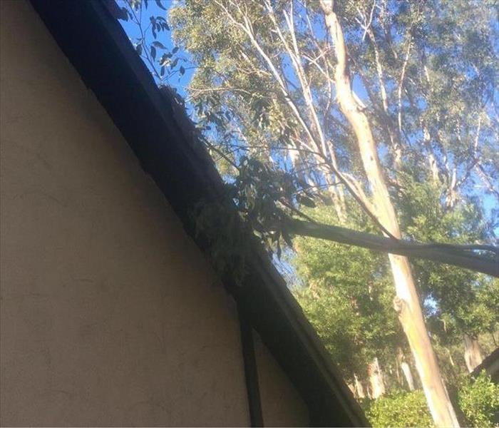 Tree Lands On Tustin Home During Wind Storm Before