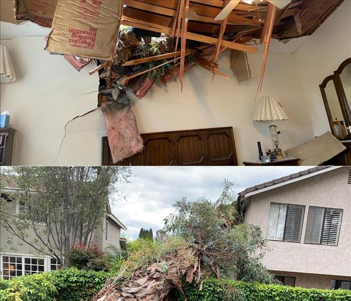 a tree that fell hits a home and bushes inside insulation and studs expose with tree branches