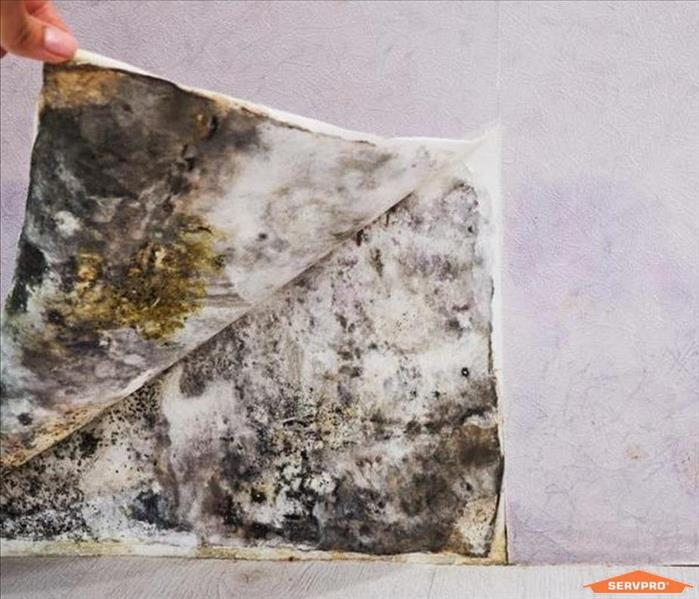 Mold Remediation The Myths About Mold