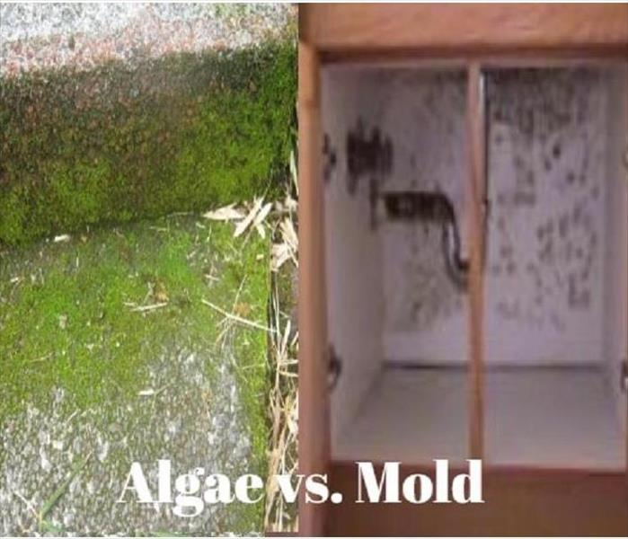 green algae on concrete vs mold on backing of cabinets that are brown with white backing showing mold present